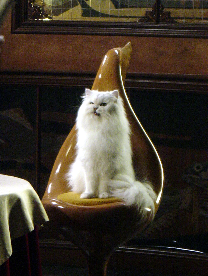 mon_petit_aladdin_in_chair.jpg